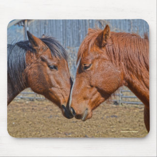 Two Loving Horses and Barn Equine Photo Mouse Pad