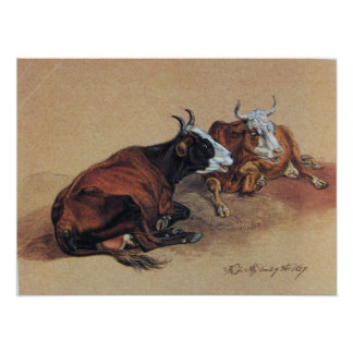 TWO LYING COWS POSTER