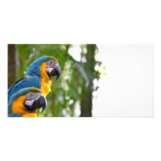 two macaw back focus bird image c.jpg photo card