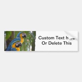 two macaw front focused c bird.jpg bumper sticker