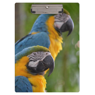 two macaw front focused c bird.jpg clipboards