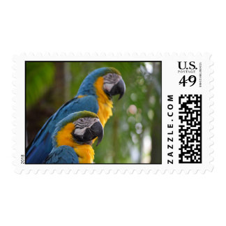 two macaw front focused c bird.jpg stamp