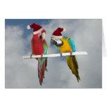 Two macaw Santas Greeting Card