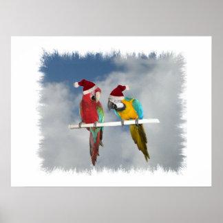 Two macaw Santas Poster