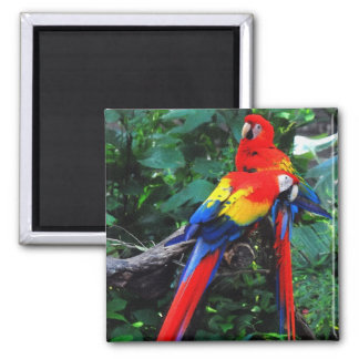 Two Macaws Magnet