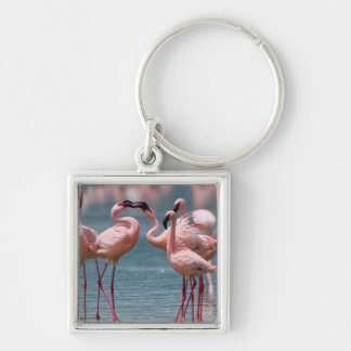 Two Male Lesser Flamingos (Phoenicopterus Minor) Keychain