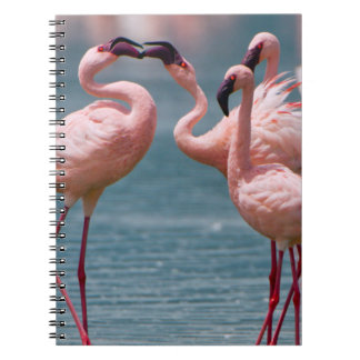 Two Male Lesser Flamingos (Phoenicopterus Minor) Note Books