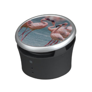 Two Male Lesser Flamingos (Phoenicopterus Minor) Speaker