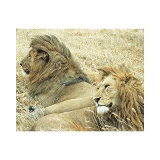 Two Male Lions Portrait Canvas Print