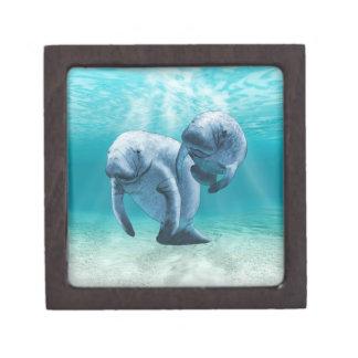 Two Manatees Swimming Gift Box