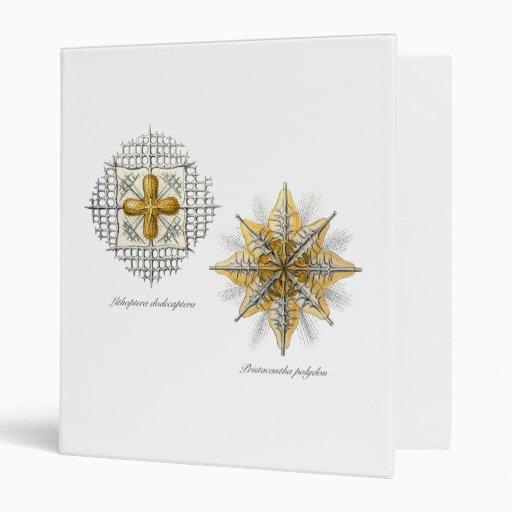 Two marine radiolarians binder