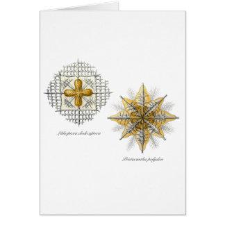 Two marine radiolarians card