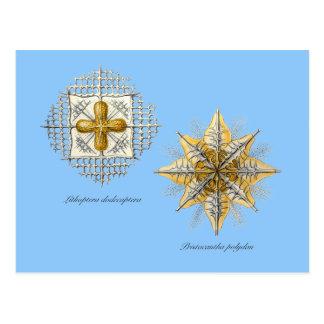 Two marine radiolarians postcard