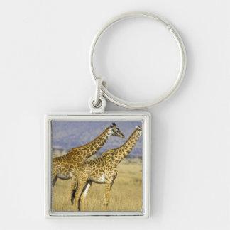 Two Masai Giraffes Giraffa camelopardalis Keychain