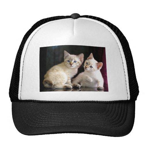 Two Mekong Bobtail Tabby Point Kittens Mesh Hat