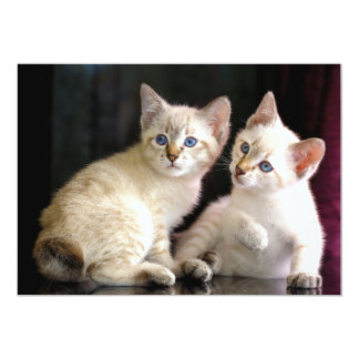 Two Mekong Bobtail Tabby Point Kittens 5x7 Paper Invitation Card