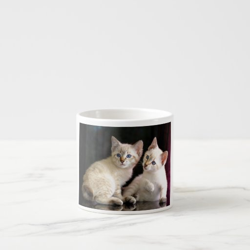 Two Mekong Bobtail Tabby Point Kittens Espresso Cups