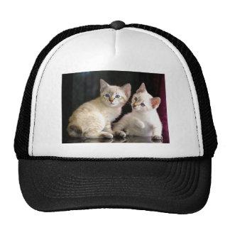 Two Mekong Bobtail Tabby Point Kittens Trucker Hat