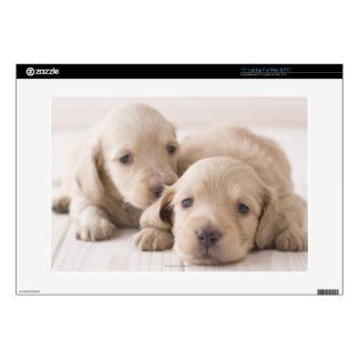 Two Miniature Dachshund Decals For Laptops