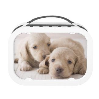 Two Miniature Dachshund Yubo Lunchbox