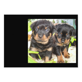 Two Mischievious Rottweiler Puppies Card