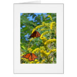 Two Monarchs Greeting Card