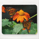 Two Monarchs Mouse Pad