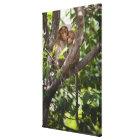Two Monkeys In A Tree Canvas Print
