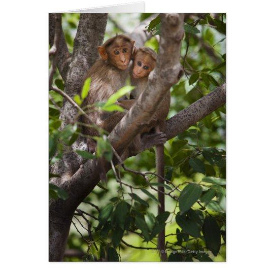 Two Monkeys In A Tree Card