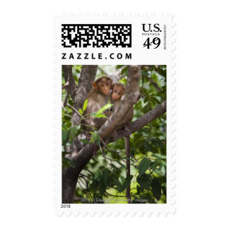 Two Monkeys In A Tree Postage Stamp