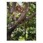 Two Monkeys In A Tree Postcard