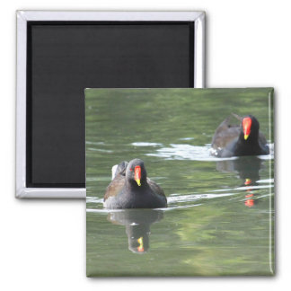 Two Moorhens 2 Inch Square Magnet