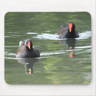 Two Moorhens Mouse Pad