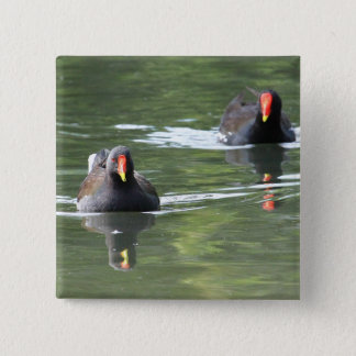 Two Moorhens Pinback Button
