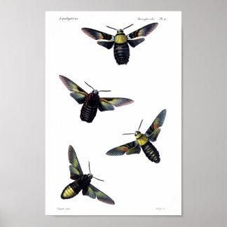 Two moths print
