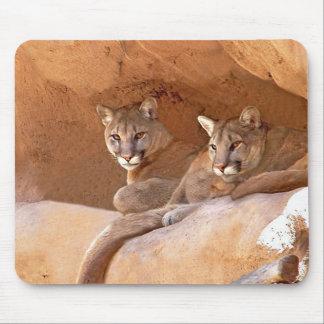 two mountain lions mousepad