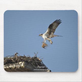 Two Nesting Ospreys, Flying Raptors, Wildlife Mouse Pad