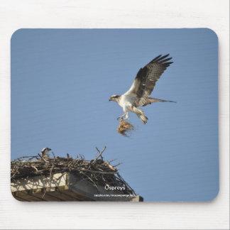 Two Nesting Ospreys, Flying Raptors, Wildlife Mousepad