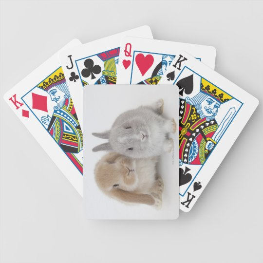 Two Netherland Dwarf and Holland Lop bunnies Bicycle Playing Cards