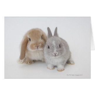 Two Netherland Dwarf and Holland Lop bunnies Card