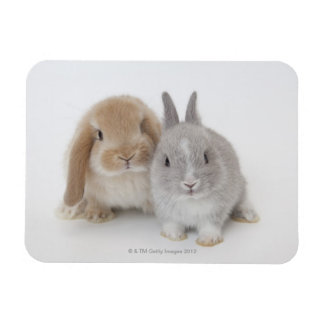 Two Netherland Dwarf and Holland Lop bunnies Magnet