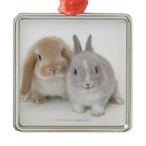 Two Netherland Dwarf and Holland Lop Bunnies Metal Ornament