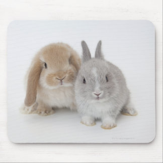 Two Netherland Dwarf and Holland Lop bunnies Mouse Pads