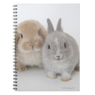 Two Netherland Dwarf and Holland Lop bunnies Spiral Notebooks
