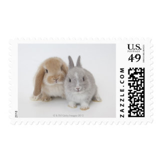 Two Netherland Dwarf and Holland Lop bunnies Postage