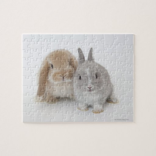 Two Netherland Dwarf and Holland Lop bunnies Puzzle
