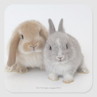 Two Netherland Dwarf and Holland Lop bunnies Square Sticker