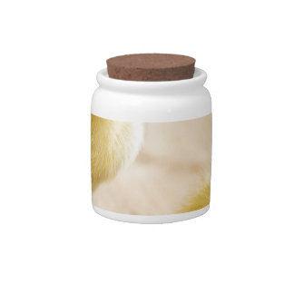 Two newborn yellow ducklings on wooden floor candy jar