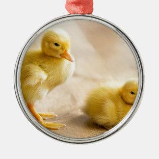 Two newborn yellow ducklings on wooden floor metal ornament