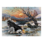 Two Newfies winter scene Poster